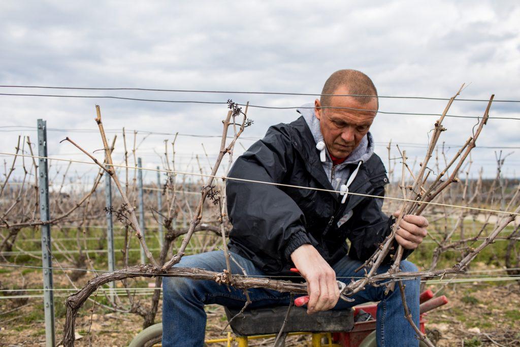 Travail de la vigne olivier rousseaux champagne