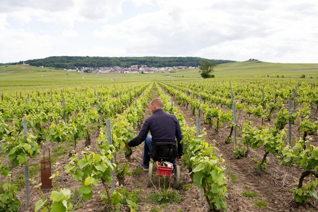 Travail olivier rousseaux champagne
